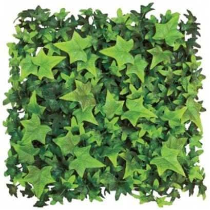 ivy-green